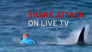 shark attack surfer mick fanning punched it in the back in shark attack surfer mick fanning punched it in the back in desperate bid to escape