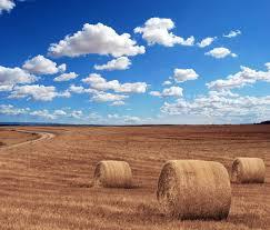 dry grass field background. Field Agriculture Harvest Village, Agriculture, Dry Grass, Image De Fond Pour Le Téléchargement Gratuit Grass Background G