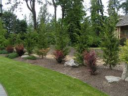 Living Privacy Fence Leyland Cypress Landscape Ideas Leyland Cypress Placed As A