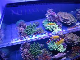 10 steps to follow for a successful reef tank