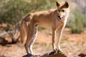 Park Wildlife - Sydney An Reptile amp; Animal Adopt Australia Australian Encounters