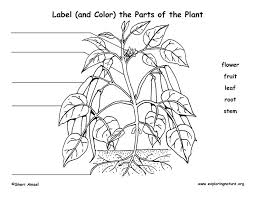 Plant Label Parts Flower Diagram To Of Nephron With Labelling ...