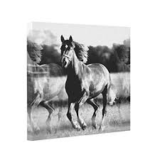 Cheap Horse Posters Amazon Com Buckie Iy Gallery Wrapped Canvas Running Horse
