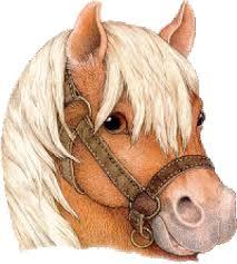 """Résultat de recherche d'images pour """"gif poney"""""""