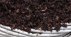 blueberry soil mix. Unique Mix Shreddedpinebark1 One Similar Blueberry Soil Mix  In Blueberry Soil Mix P