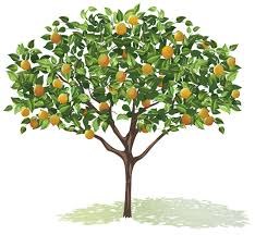 fruit tree clipart. Simple Fruit Graphic Freeuse Stock Fruit Trees Clipart Tree Drawing At Getdrawings To Clipart O
