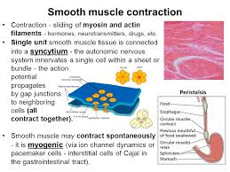 how smooth muscle contracts