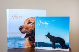 Animal Photo Albums Home Pet Photography In Portland Oregon Sit Stay Pet
