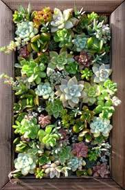 Small Picture 20 Cool Vertical Gardening Ideas Succulent wall Plant art and
