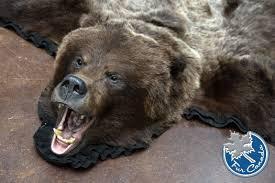 Grizzly Bear Skin Rugs - Grizzly Bear - (Ursus Arctos) - FurCanada