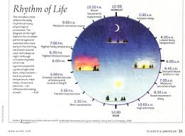 Listen To Your Body Clock Cancer And Your Health Grace