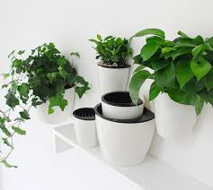 Accessories: Self Watering Wall Mounted Planter - Indoor Plants