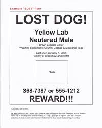 lost and found flyers lost found pets benldadoptapet