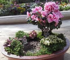 bonsai gardens. fairy garden bonsai gardens