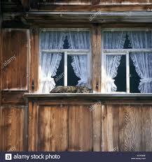Katze Gestreifte Haus Katze Inländischen Schlafende Windows