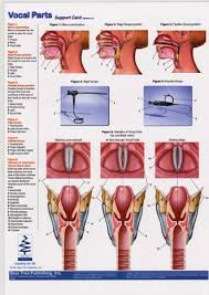 Larynx Chart Vocal Parts Pharynx Larynx Anatomical Chart Speech