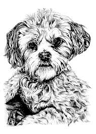 Dog Dogs Adult Coloring Pages