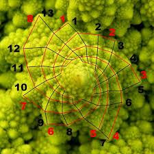 Resultado de imagen de Figuras geometricas de la sucesión de Fibonacci
