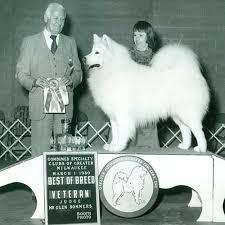 Samoyed Dog Breed Information