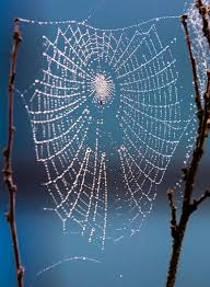 Image result for FREE PHOTOS OF COBWEBS WITH DEW