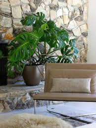 15 Indoor Airpurifying Plants For Your Apartment Or Home  6sqftClimbing Plants Indoor