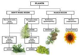 Plant Kingdom Classification Chart For Kids Plant Classification Chart Plant Classification Teaching