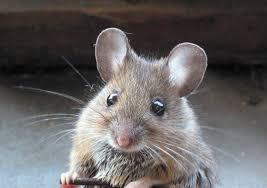 een muis in huis