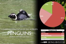 Chart The Worlds Most Endangered Penguins