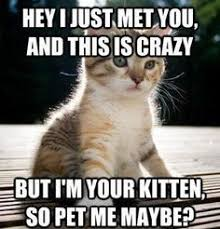 Silly Kitty Memes aka Cat Memes on Pinterest | Cat Memes, Funny ... via Relatably.com