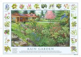 how to build a rain garden plants