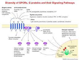 Gpcr Signaling Functional Analysis Of Heterologous Gpcr Signaling Pathways