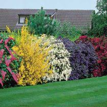 Small Picture Evergreen Flowering Shrubs For Landscaping Garden Pinterest