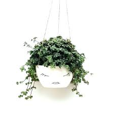 self watering hanging pots wall hanging flower pots wall mounted pot holder garden wall hanging plant