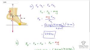 Openstax College Physics Solution Chapter 9 Problem 33 Problems Exercises