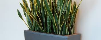 Tropical office plants Residential Should Repot My Indoor Tropical Plant Fundyforceorg Should Repot My Indoor Tropical Plant Moore Park Plantscapes