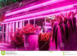Light Farm Seedling Grow With Led Plant Light In Farm Greenhouse Stock
