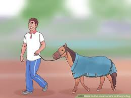 image titled put on a horse s or pony s rug