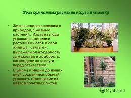 Презентация на тему Комнатные растения в интерьере квартиры  3 Роль комнатных