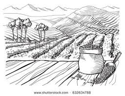coffee plantation illustration. Interesting Coffee Coffee Plantation Landscape Table Cup Sack In Graphic Style Handdrawn  Vector Illustration To Coffee Plantation Illustration I