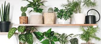 33 low light houseplants to bring your