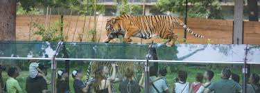 zoo. Brilliant Zoo For Zoo H