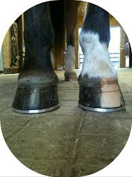little known qualities of great farriers horse listening