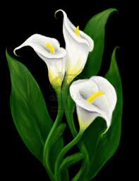 calla lily flower drawing calla lily painting calla lilies by invisiblehinge digital art