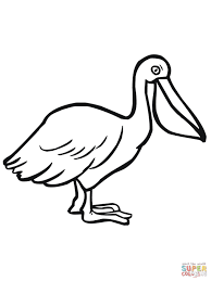 Small Picture Pelican Seabird coloring page Free Printable Coloring Pages