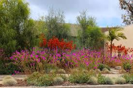 Small Picture California Native Drought Tolerant Plants Home Decorating