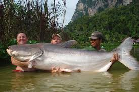 Image result for largest fish in the world