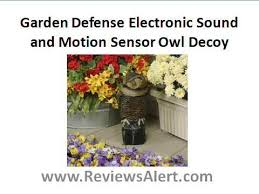 owl decoy to scare away birds and critters