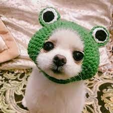 trang phục cho thú cưng