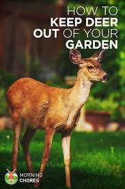 how to keep deer out of your garden. 21 Ways To Keep Deer Out Of Your Garden And Plants Without Killing Them How
