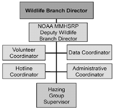 Hazing Group Organizational Chart Download Scientific Diagram